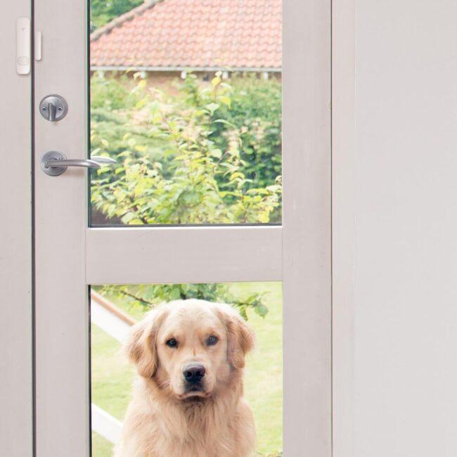 alarm-sensor-doorwindow-motion-pet